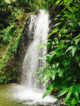 Trois-Ilets, Martinique: photo3.jpg