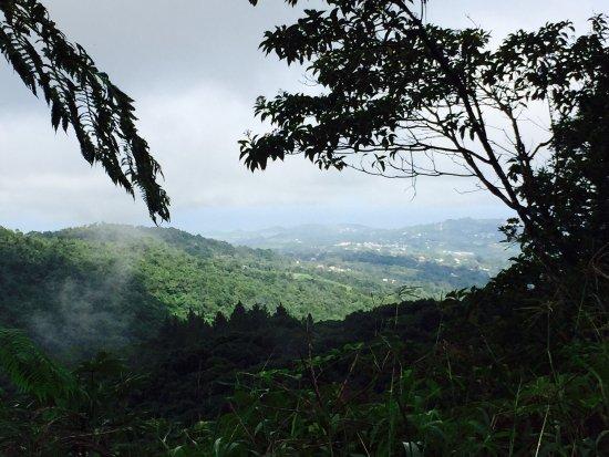 Trois-Ilets, Martinica: photo8.jpg