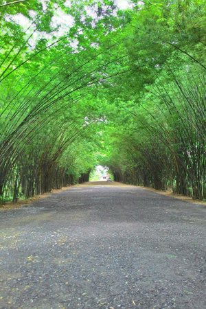 Nakhon Nayok, Tailândia: ซุ้มไม้ไผ่ที่เป็นไฮไลท์