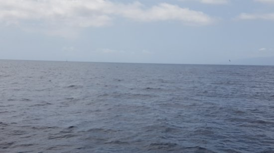 Freebird Catamarans: 20170912_141457_large.jpg
