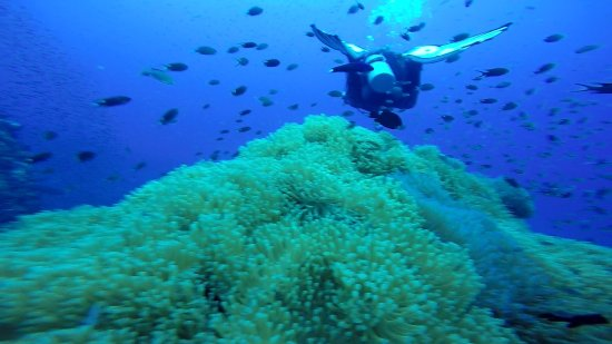 Discovery Dive Centre: Screenshot_20170919-191124_large.jpg