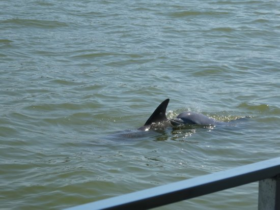 Hubbard's Marina: The dolphins came up close!