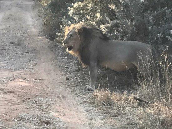 Thabazimbi, Sudáfrica: photo7.jpg