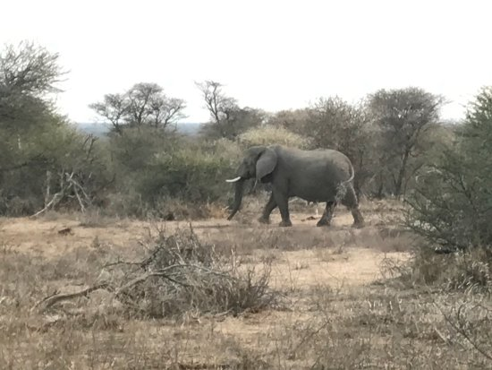 Thabazimbi, Sudáfrica: photo8.jpg
