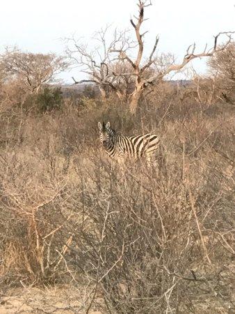 Thabazimbi, Sudáfrica: photo9.jpg