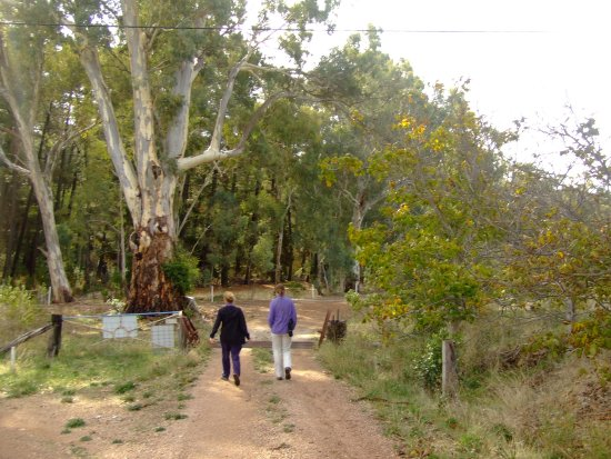 Wirrabara, Australia: Off for a walk