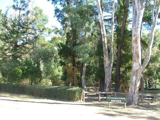 Wirrabara, Australia: Historic Old Forest Nursery
