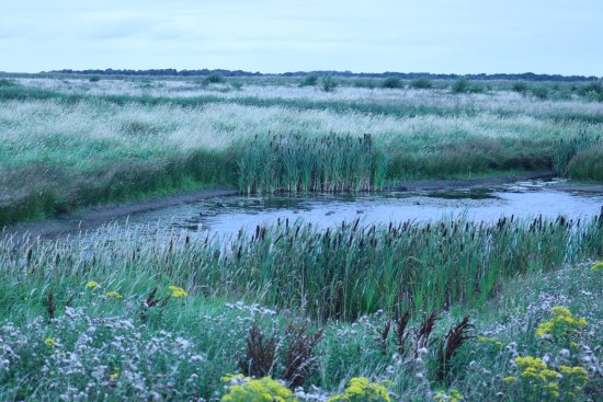 Lunt Meadows & Wetlands Nature Reserve