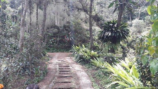 Tanah Rata, Malaysia: Tan's Camellia Garden