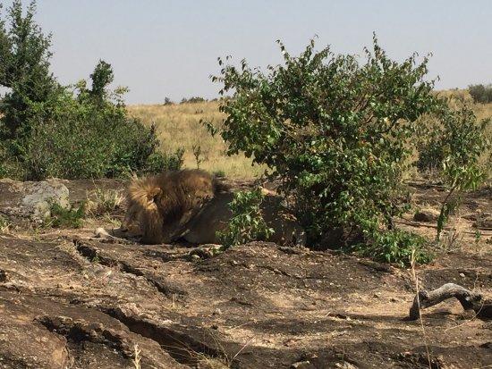 Naro Moru, Kenia: photo1.jpg