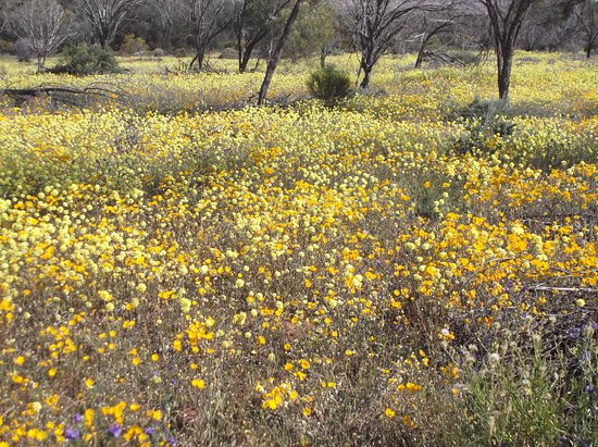 Australian Wildflower Tours
