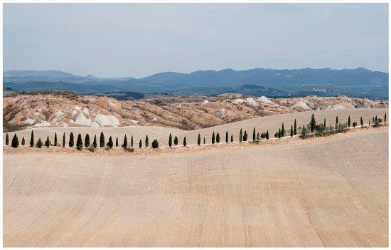 Asciano, Italia: una fila di cipressi