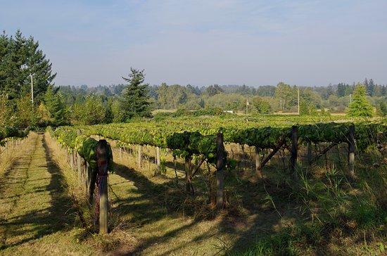 Langley, Canadá: The vineyard