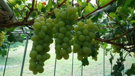 Funao Winery
