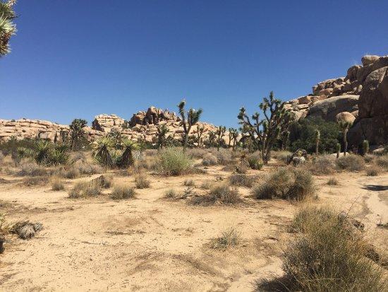 Twentynine Palms, Kaliforniya: photo2.jpg
