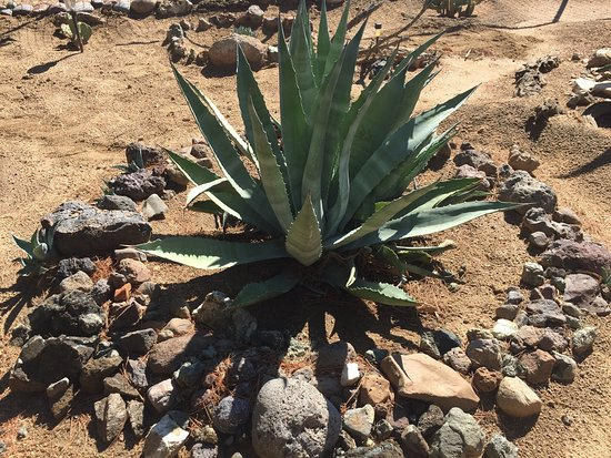Twentynine Palms, Kalifornia: photo5.jpg