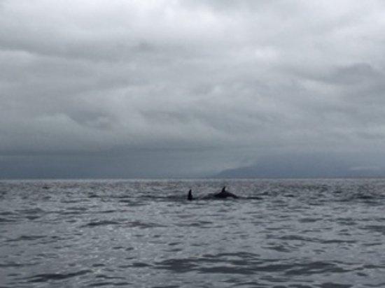 Harv and Marv's Outback Alaska: Orcas