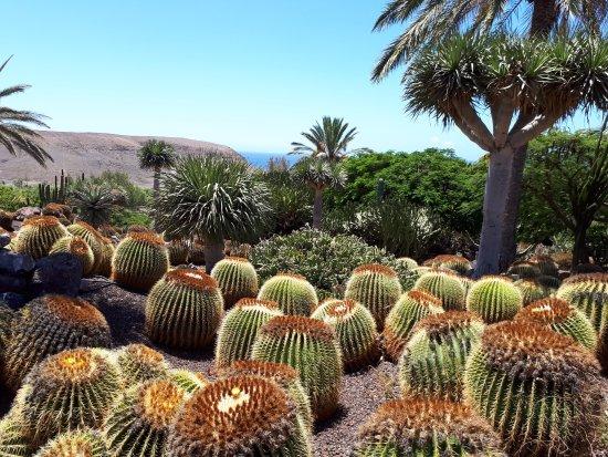 Jardin Cactus Picture Of Oasis Park Fuerteventura Fuerteventura
