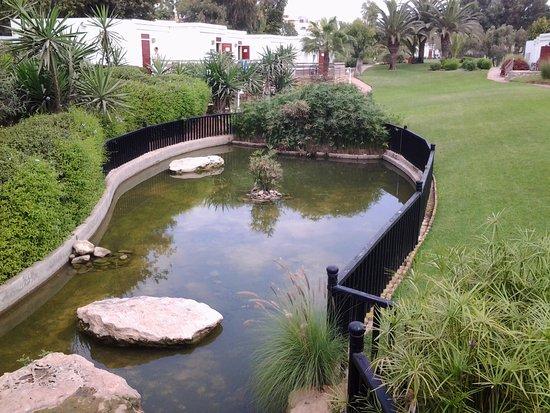 Jardin photo de club med agadir agadir tripadvisor for Jardin 66