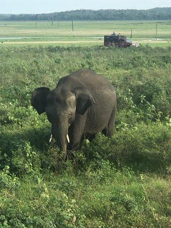 Kaudulla National Park : photo7.jpg