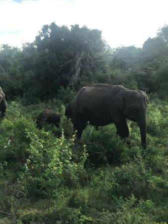 Kaudulla National Park : photo8.jpg