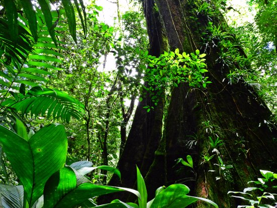 Ринкон-де-ла-Вьеха, Коста-Рика: Sensoria