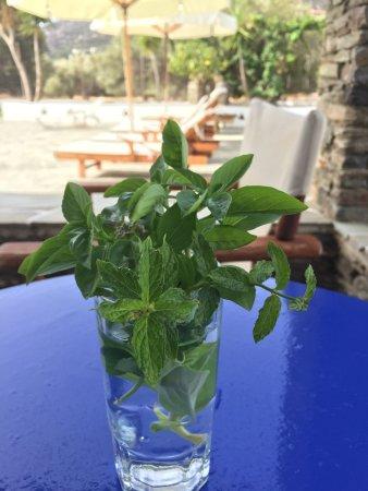 Villa Antoniadis: Sweet host picked me fresh herbs to grace my table