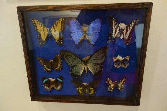 Pacific Grove Museum of Natural History: Butterflies