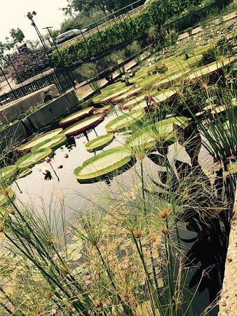 San Angelo, TX: photo8.jpg