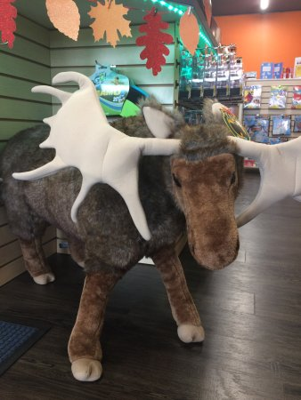 Petawawa, كندا: Moose!