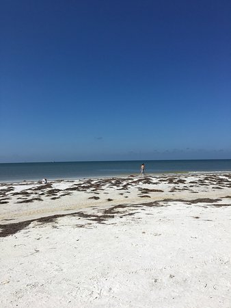Honeymoon Island State Park: photo0.jpg