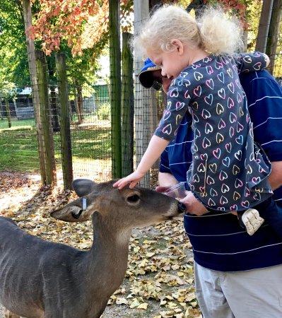 Wisconsin Deer Park: photo2.jpg