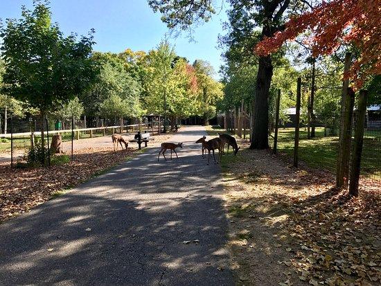 Wisconsin Deer Park: photo3.jpg