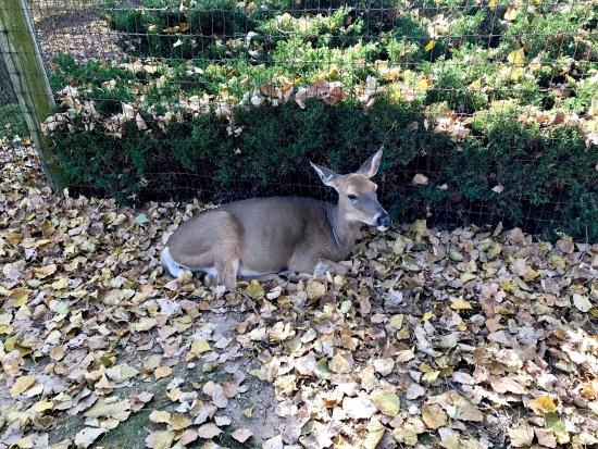 Wisconsin Deer Park: photo4.jpg