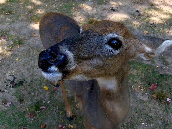 Wisconsin Deer Park: photo5.jpg