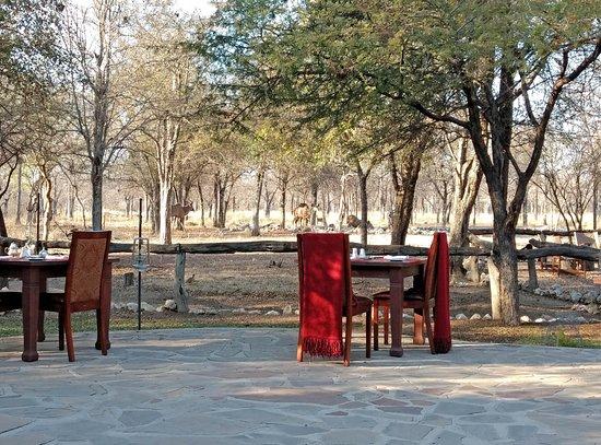 Etosha Aoba Lodge : Espace pour les repas avec visite des animaux du parc au point d'eau situé derrière les barrière