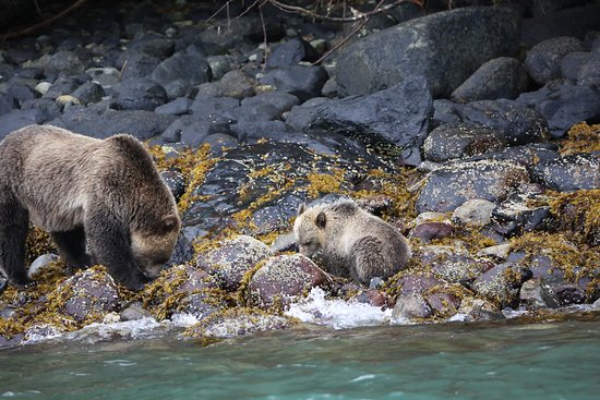 Telegraph Cove, Canadá: A mother and her cub.