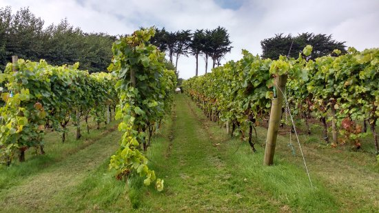 Polgoon Vineyard