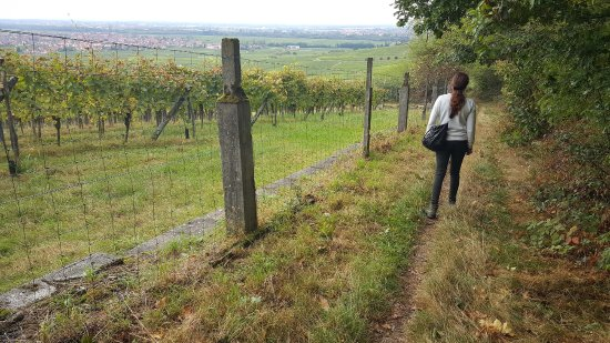 Scherwiller, France: retour par le vignoble