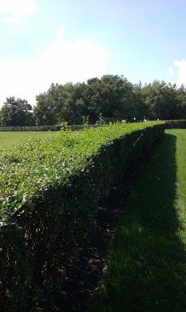 Wilmington, DE: Untrimmed Hedges