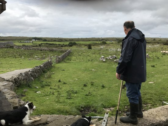 Caherconnell, Ireland: Sheep herding demonstration