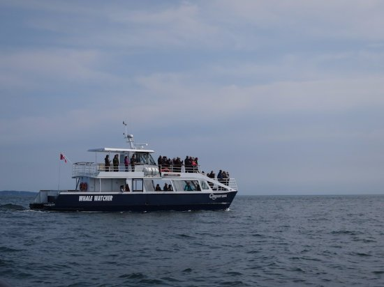Fundy Tide Runners Whale Watching: another whale watching boat