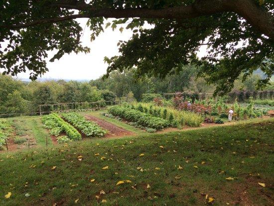 Thomas Jefferson's Monticello: photo1.jpg