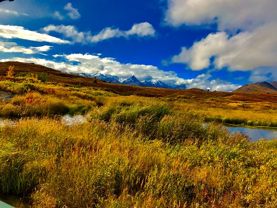 Cantwell, AK: Spectacular fall colors in early September