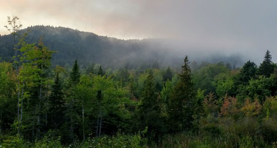 Southwest Harbor, ME: Evening fog rolls in in the valley in front of our #7 campsite.