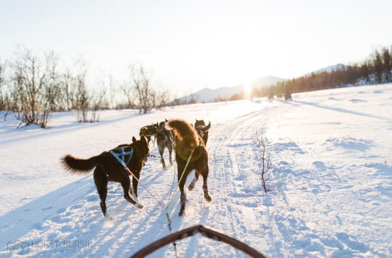 Tromso Dog Sledding Tour in the Arctic