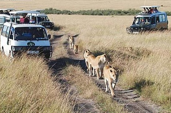 6Days Tanzania Tented Camping Safari...