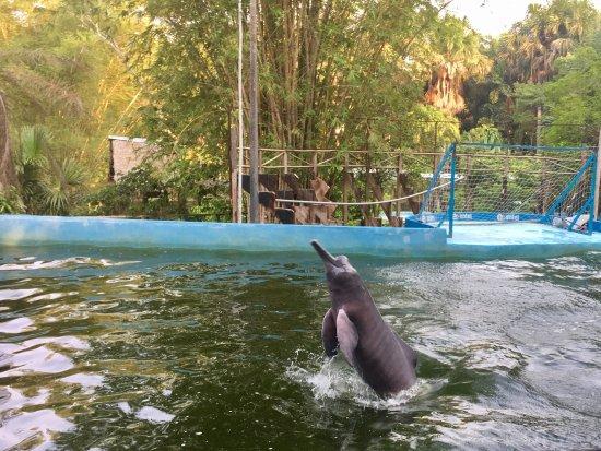 Quistacocha Zoo: photo1.jpg