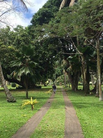 Suva, Fiji: photo1.jpg
