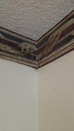 Howard Johnson Express Inn Savannah GA: mold growing on border